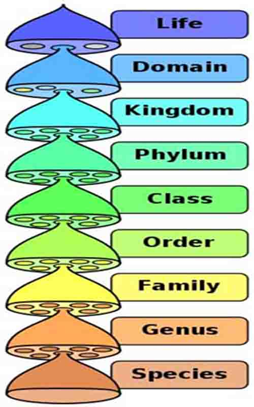 Biological Classification Graphic