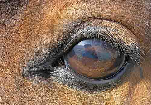 Horse Eye by Waugsberg
