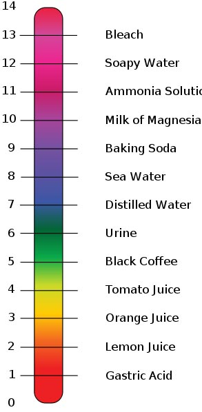 pH Scale Graphic by Edward Stevens