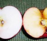 Apple on left was swabbed with lemon juice. Apple on right was not. Note accumulation of brown benzoquinone.