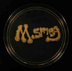M. smeg written in Mycobacterium smegmatis bacteria and growing on TSY agar